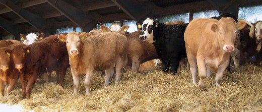 Det er nå betydelige underskudd av fôringsdyr i landet, og vi oppfordrer til å melde inn overskuddet nå!