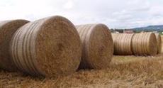 Gras-/halmballer - bilde fra Landbruk Nordvest