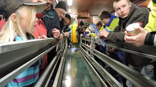 Tor Arne viser korleis det rullande fôrbrettet fungerar som vekker stor interesse blant unge og gamle.
