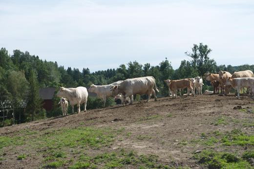 Stor etterspørsel etter fôringsdyr