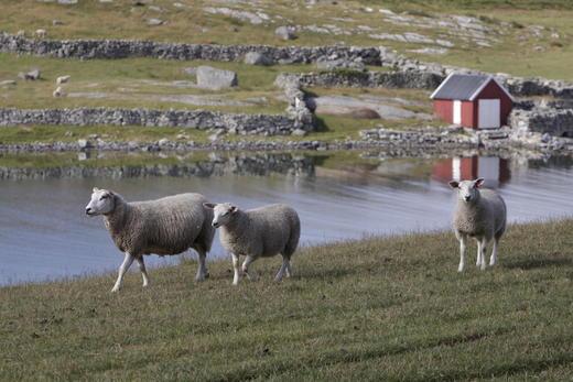 Markedssituasjonen for lammesesongen 2015