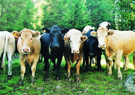 I begynnelsen av september avtar beitekvaliteten hos de fleste. Ta derfor flokken inn, sorter fra det som ikke skal brukes til eget påsett. Meld disse inn til liv både fôringsokser og kviger.