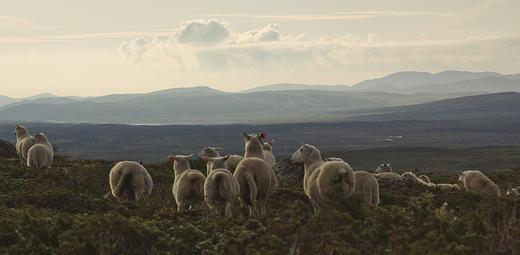 Kveldsstemning fra Øystre Slidre i Valdres. Foto: Grethe Ringdal, Animalia