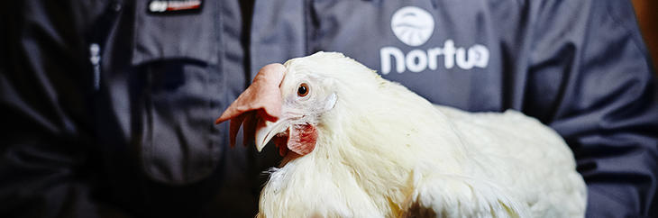 Norturahøne