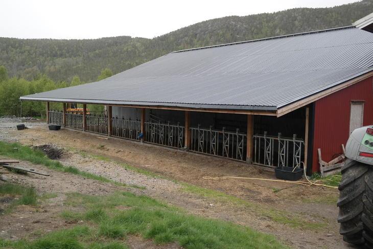 Kombinert Sauefjøs og enkelt ammekufjøs som også blir som ekstra areal i lamming