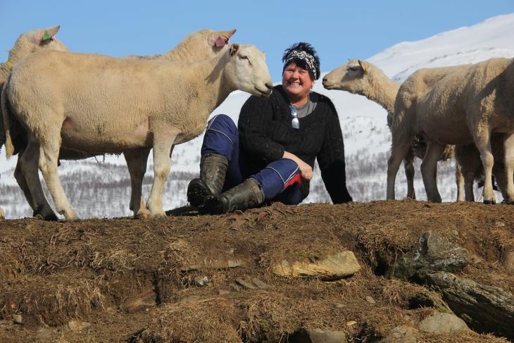 Laila Hoff med sauer i fjellet