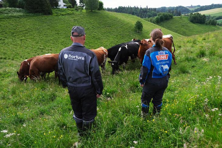 Bilde av én rådgiver i TINE og en rådgiver i Nortura. De er ute på beite blant kyr.